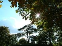 Sun thro trees