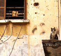 Cat on the ledge