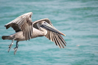 pelican series 3