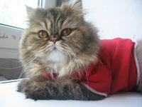 red_cat
