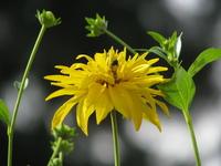 Flowers - Macro 301