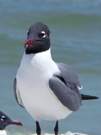 Sea Gulls 2