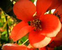 Flower2 2
