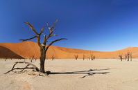 Namibia - Namib desert - Dead vlei