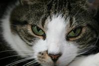 Cat, concentration