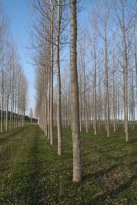 Regular forest