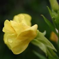 wild flowers 11