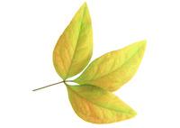 Leaf 106