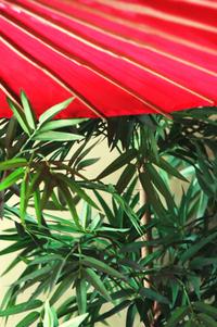 Parasol and Bamboo
