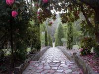 Maroondah Reservoir Garden Pat