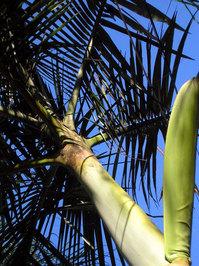 palms and sky 2