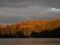 Summer & Fall 4