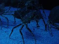 Crab under water