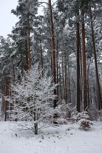 idyllic winter forest 3