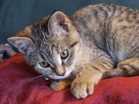 Pet House Cat