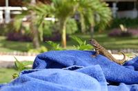 Reptil cubano 2