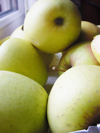 Apple yellow apple