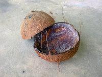 coconut shell 2
