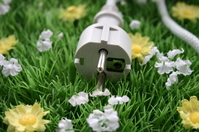 plug in grass