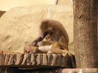 Stroking monkey