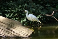 Bird on log