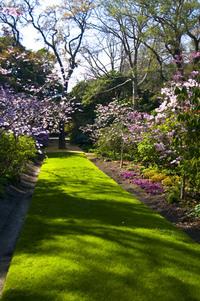 Garden Walkway 2