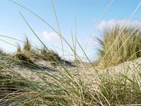 Dune Grass 001