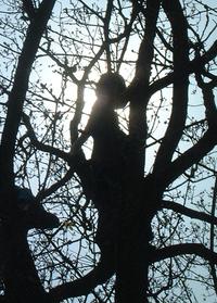 Free Boom silhouet 3 Stock Photo - FreeImages.com