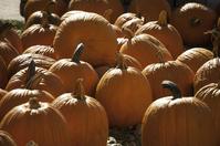 Free Fall Pumpkins Image