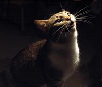 Curiosity of the cat 2