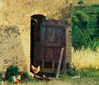Italian cocks