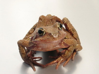 Froggy Pond 2