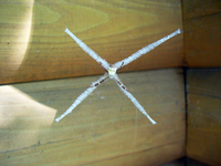 X Spider