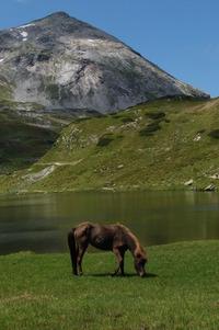 Mountain animals 2