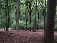 Nature Nederland 4