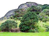 Landscape-Mountain and rainforest