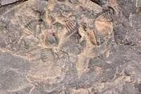 trilobite tobermory ontario canada 7427.JP