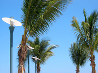 Beach Palm 1