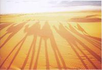 camel_shadow