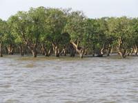 Floating village, Cambodia 3