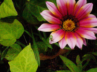flowers in 'Planta' 2