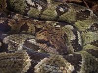 Snake at S.A. Zoo