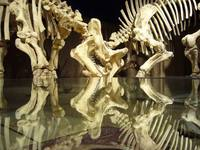 Dinosaurs Skeletons