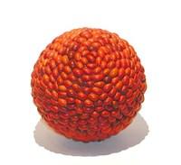 ornamental bean sphere 2