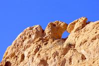 Kissing Camels