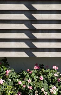Roses blk/wht pattern
