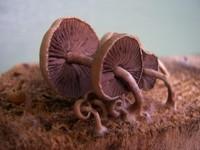 Sideways mushrooms on wood