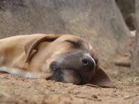 sleeping in peace