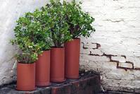 diminishing plants