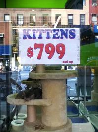 Kitten sale
